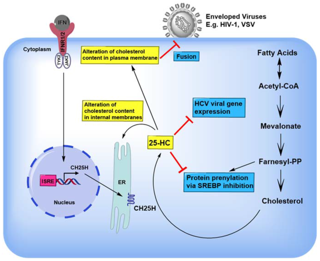 Scientists have found an antiviral metabolite which is potential serum biomarker for SARS-CoV-2 infection.